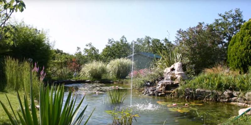 Jardin aquatique d finition et conseils for Jardin definition