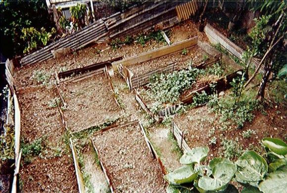 Jardin créole