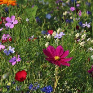 Allovoisins.com : trouver des professionnels pour l'entretien de son jardin